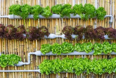 Beginner Vertical Garden Tips