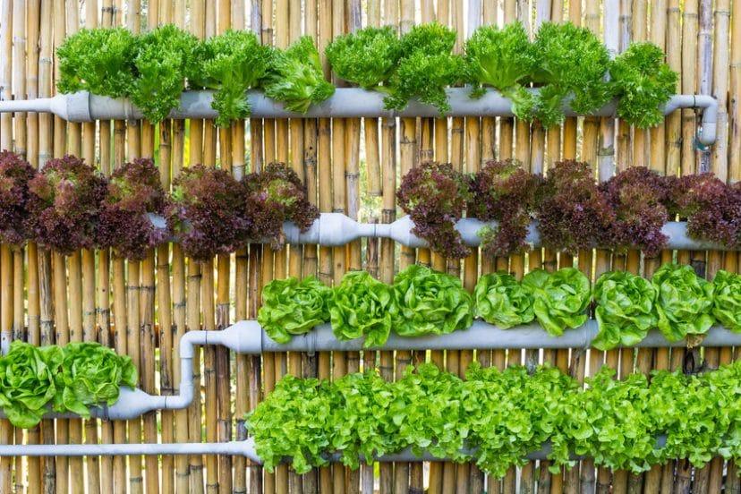 Beginner Vertical Garden Tips