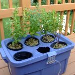 Grow your own hydroponic food