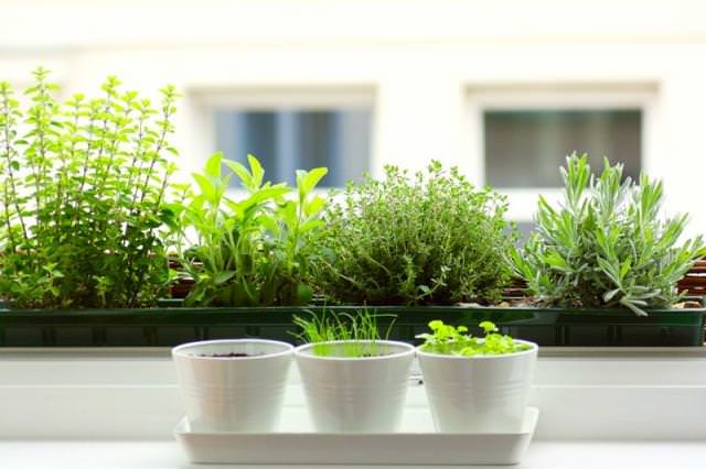 Herbs-for-indoor-garden