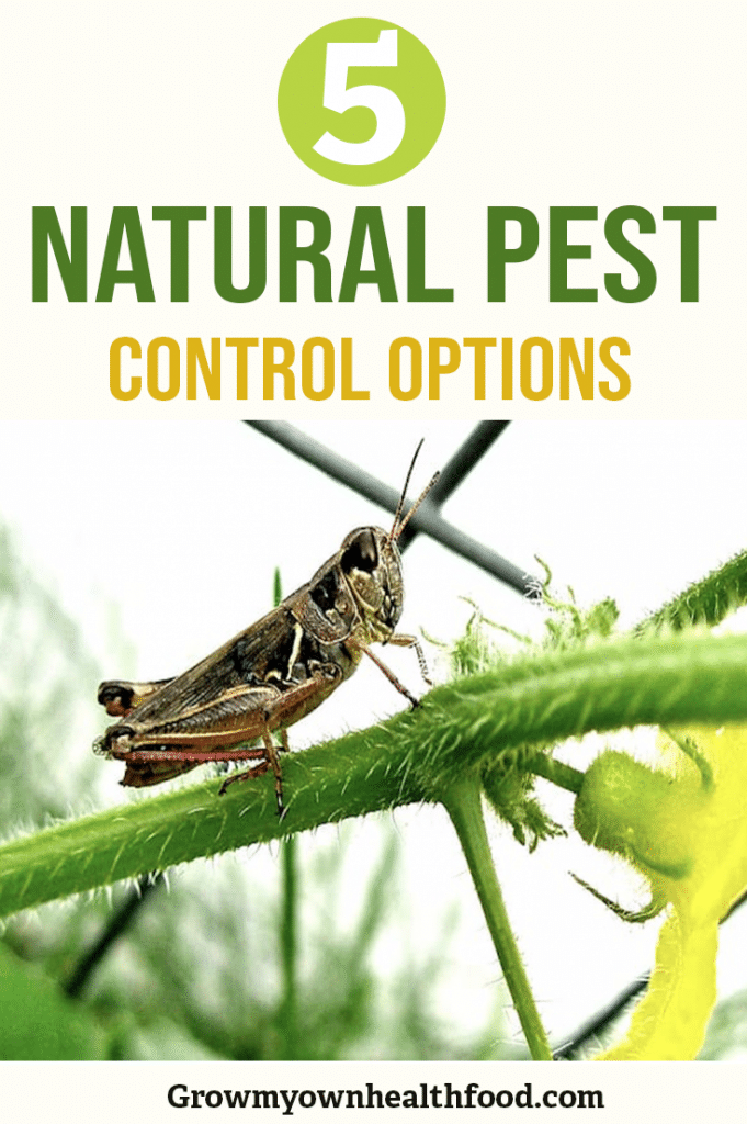 Best Natural Pest Control For gardens