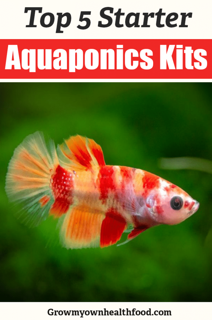 Aquaponic Kits for Beginners