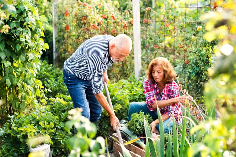 Backyard Garden Design Basics 8 Steps To A Better Backyard