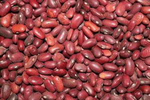 Beans - Survival Garden Crop
