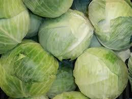 Cabbage - Survival Garden