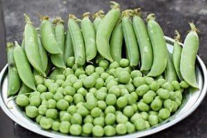 Peas - Survival garden Crop