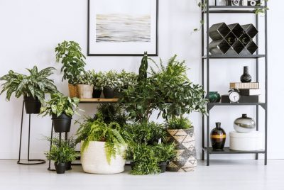 Apartment Gardening Tips Ideas For Small Indoor Spaces