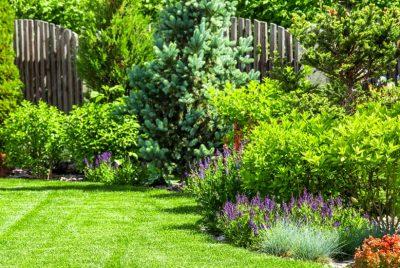 Backyard Garden Design Basics 9 Steps To A Better Backyard