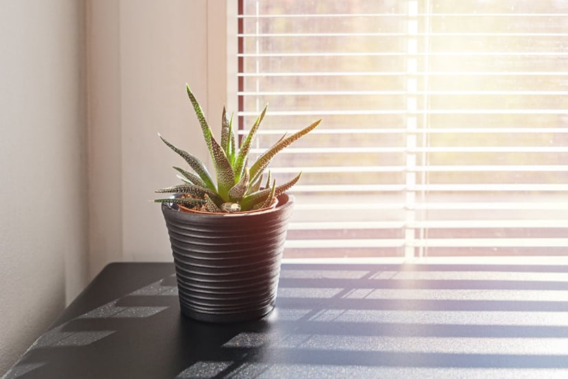 Check Out Plants that Don't Need A Lot Of Sunlight