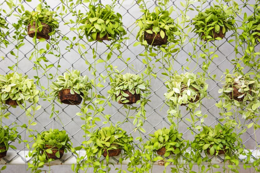 Pick Out What You Want to Use for Your Vertical Garden