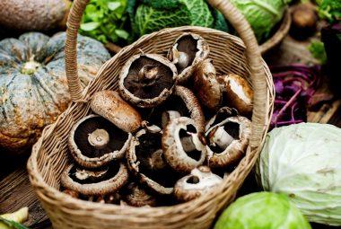 Create A Home Garden For Medicinal Mushrooms