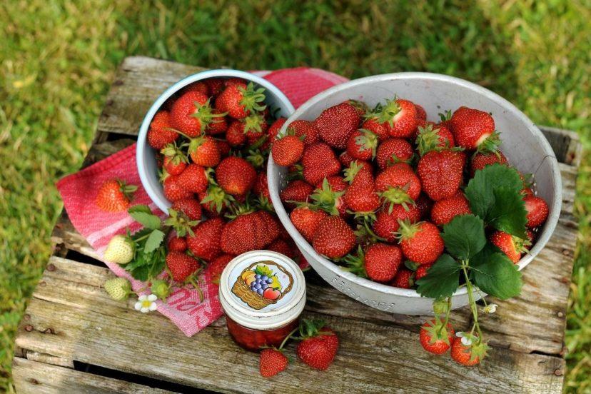 Growing Strawberries Indoors