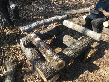 Medicinal Mushroom Logs