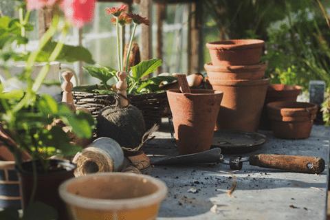 Growing Tomatoes Indoors