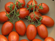 Roma Seeds for Growing Tomatoes Indoors