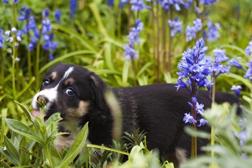 Pet Safe Garden