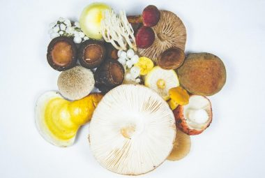 Different Types Of Mushroom