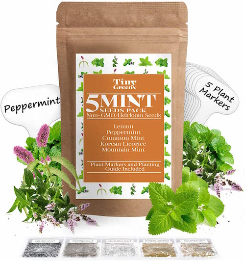 5 Mint Seeds Garden Pack