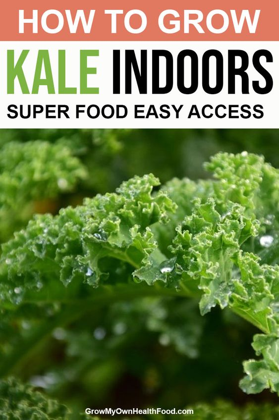 How To Grow Kale Indoors - Super Food Easy Access