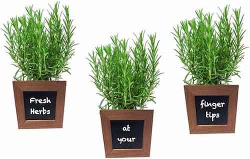 Wooden Herb Pots