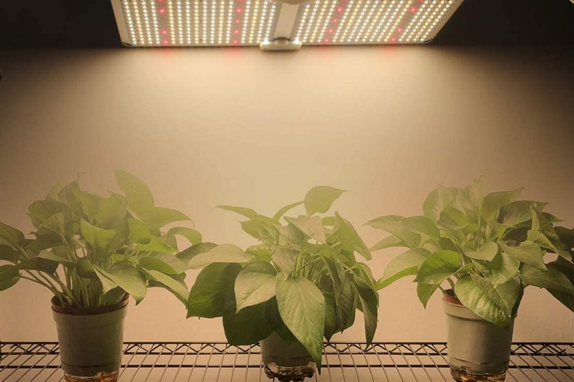 Growing Plants Indoors