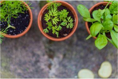 Kitchen Garden Seeds Featured Image
