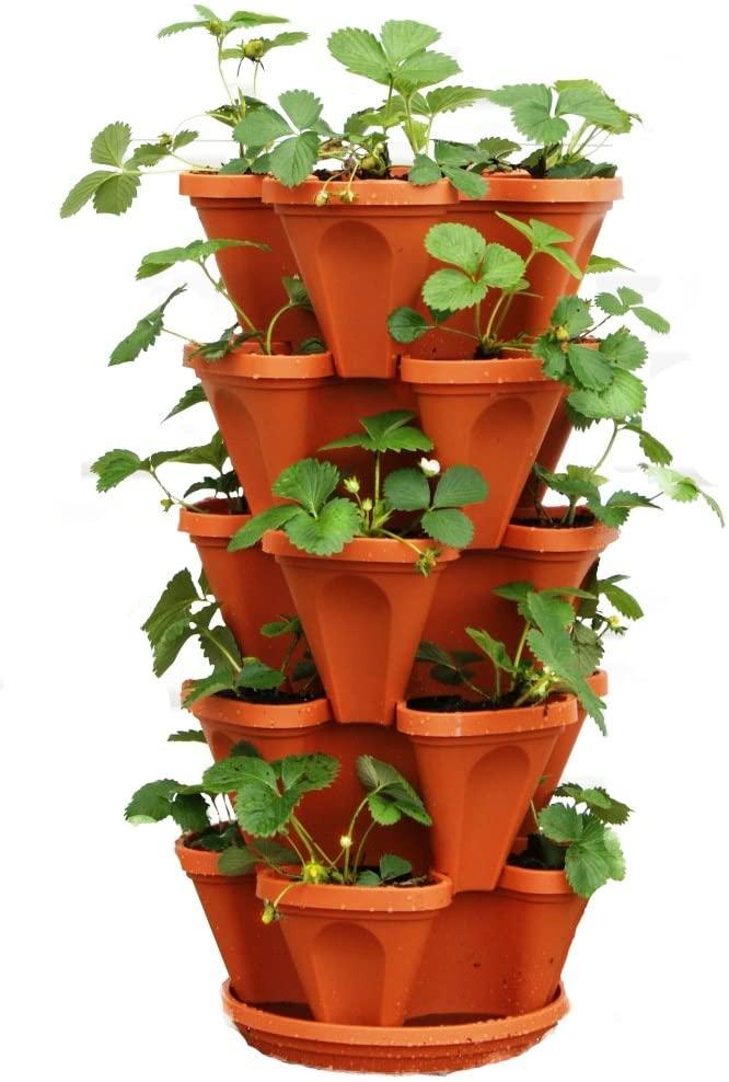 strawberry herb garden planter