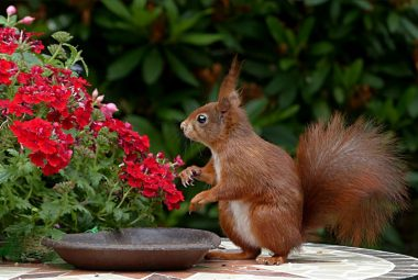 Squirrel On Top Of A Table With Plants