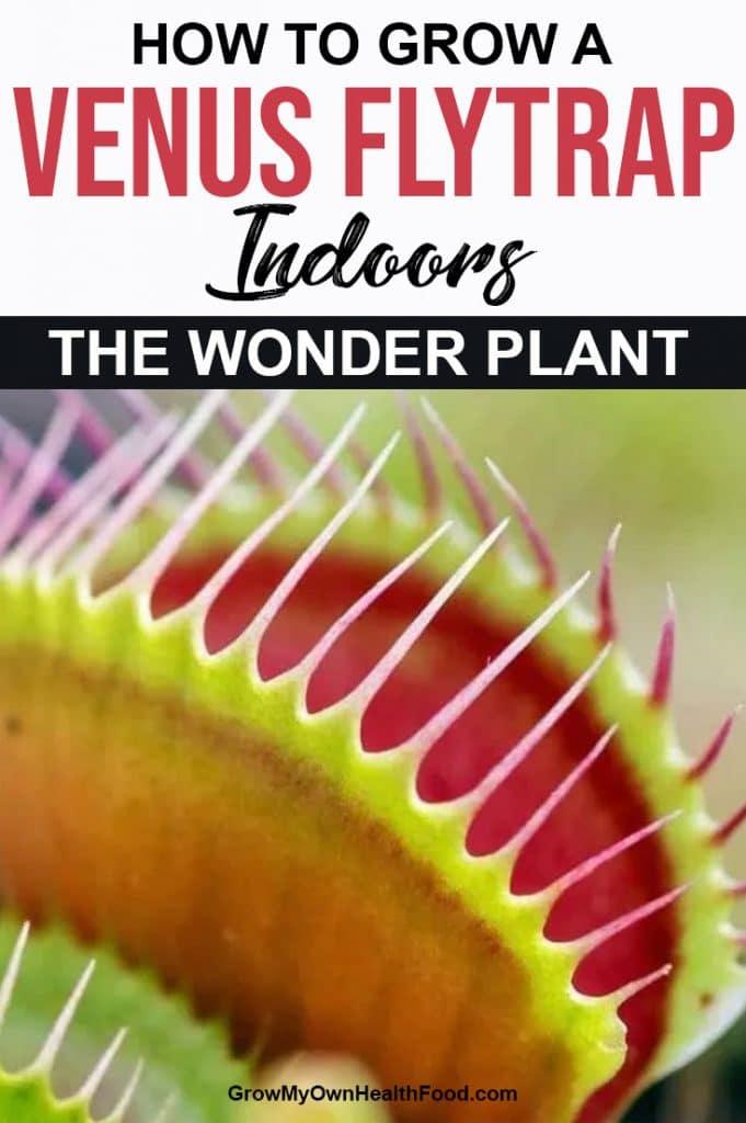 Grow a Venus Flytrap Indoors