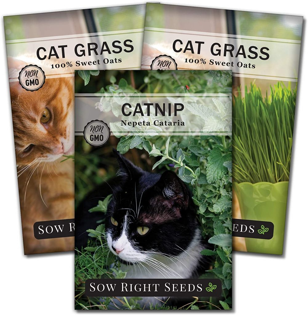Sow Right Seeds - Catnip and Cat Grass Seed Collection for Planting Indoors or Outdoors