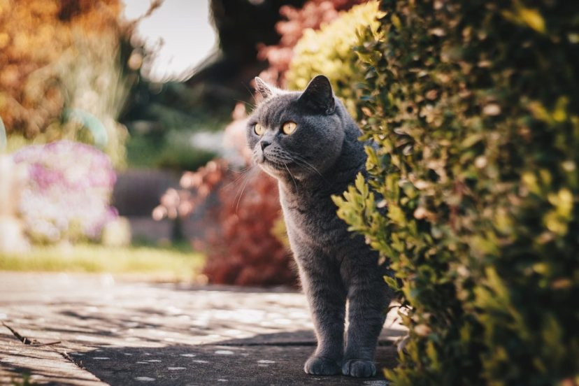 Cat At The Garden