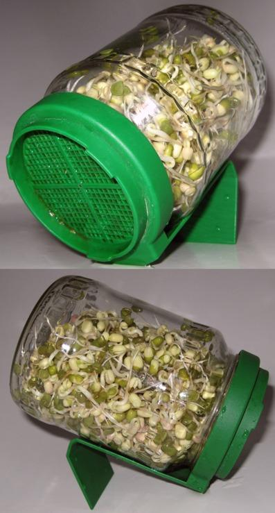 bean sprouts jar