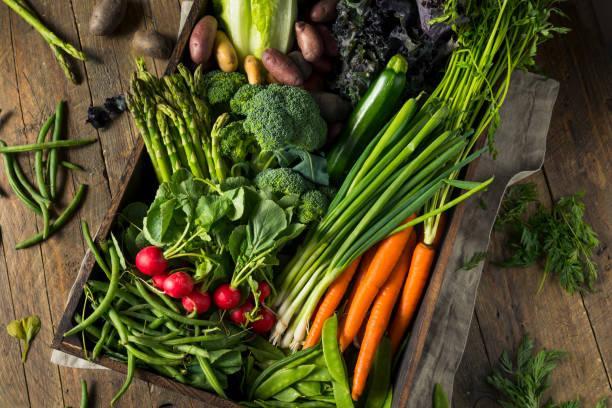 Best Vegetables To Grow Indoors Under Lights