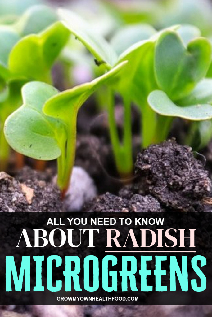 All You Need To Know About Radish Microgreens
