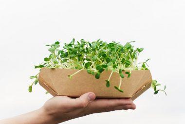 Microgreens Hydroponic Gardening