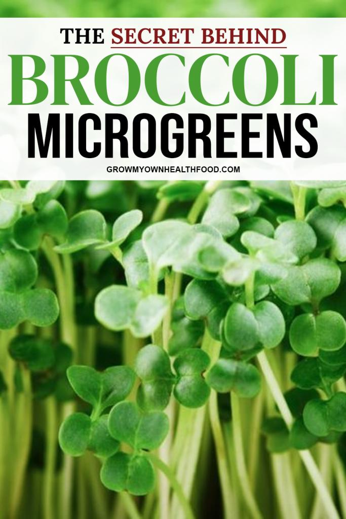 The Secret Behind Broccoli Microgreens