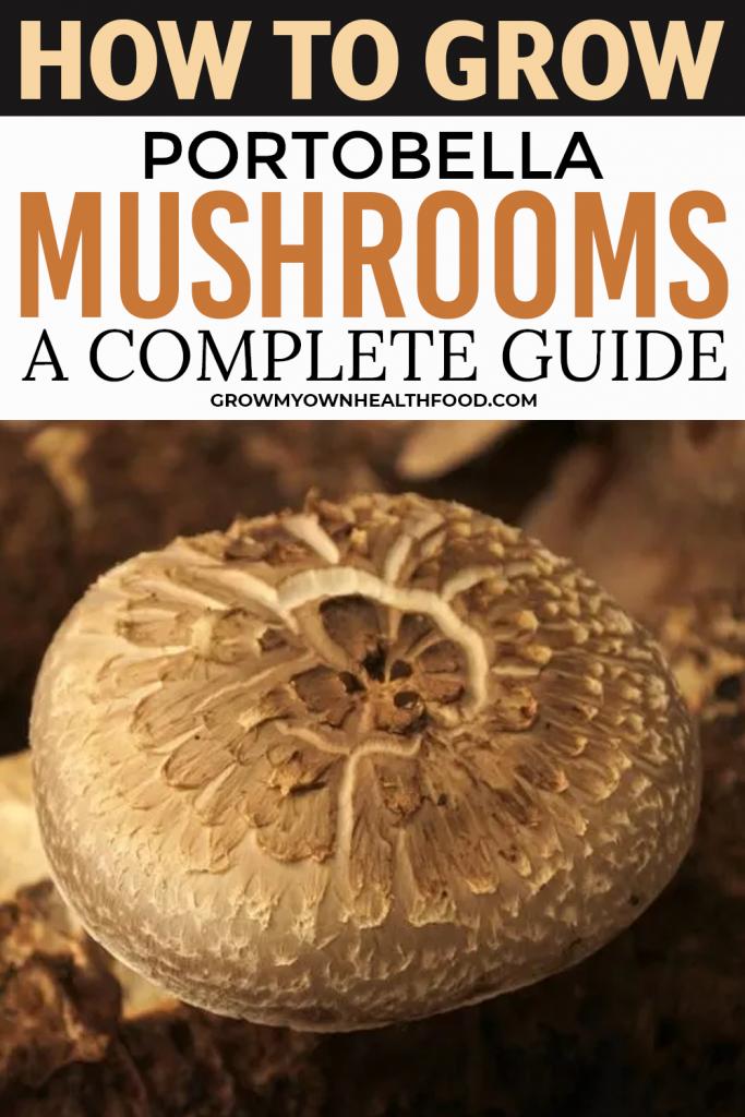 How To Grow Portobella Mushrooms