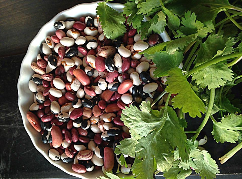 Cilantro with beans