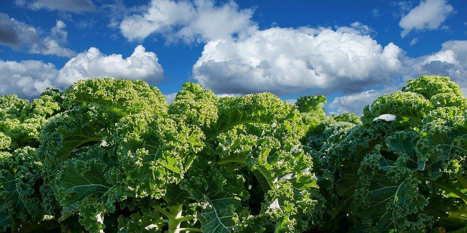 Growing Microgreens Phase