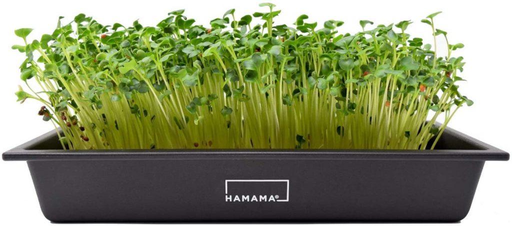HAMAMA Home Microgreens