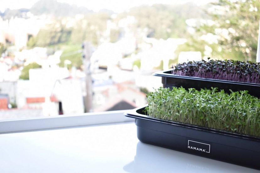 Hamama Microgreen Kit Review