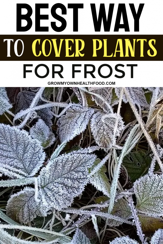 Best Way to Cover Plants for Frost