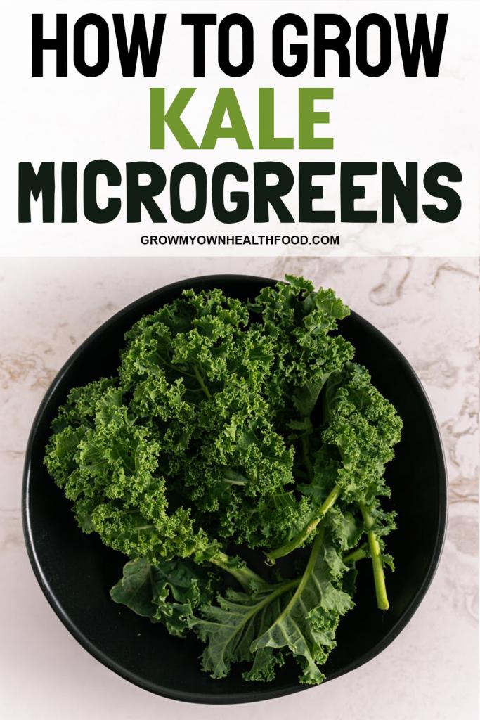 How to Grow Kale MicroGreens