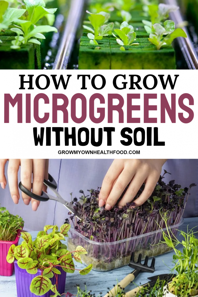 How to Grow Microgreens Without Soil