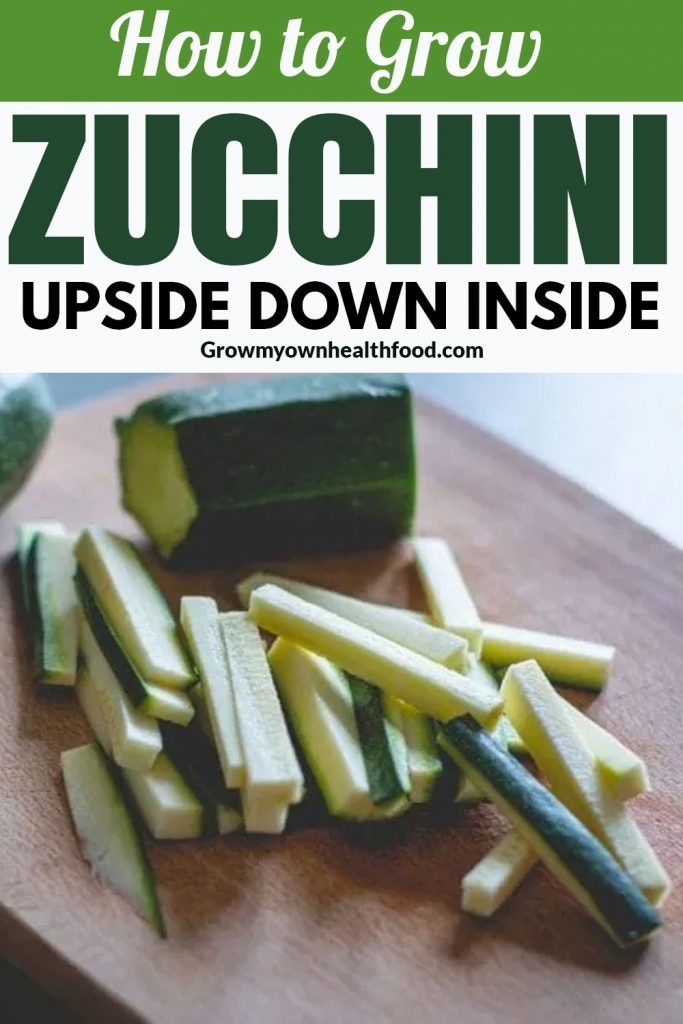 How to Grow Zucchini Upside Down Inside