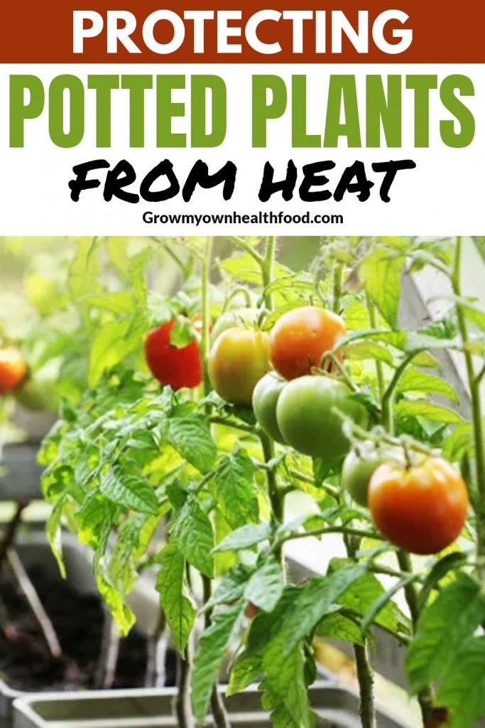 Protecting Potted Plants From Heat