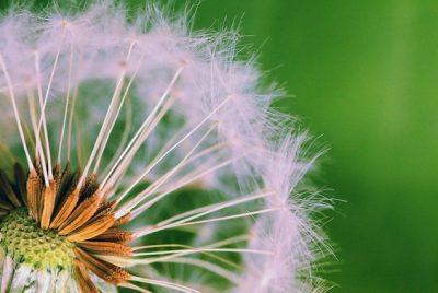 Prevent Weeds In Garden FI