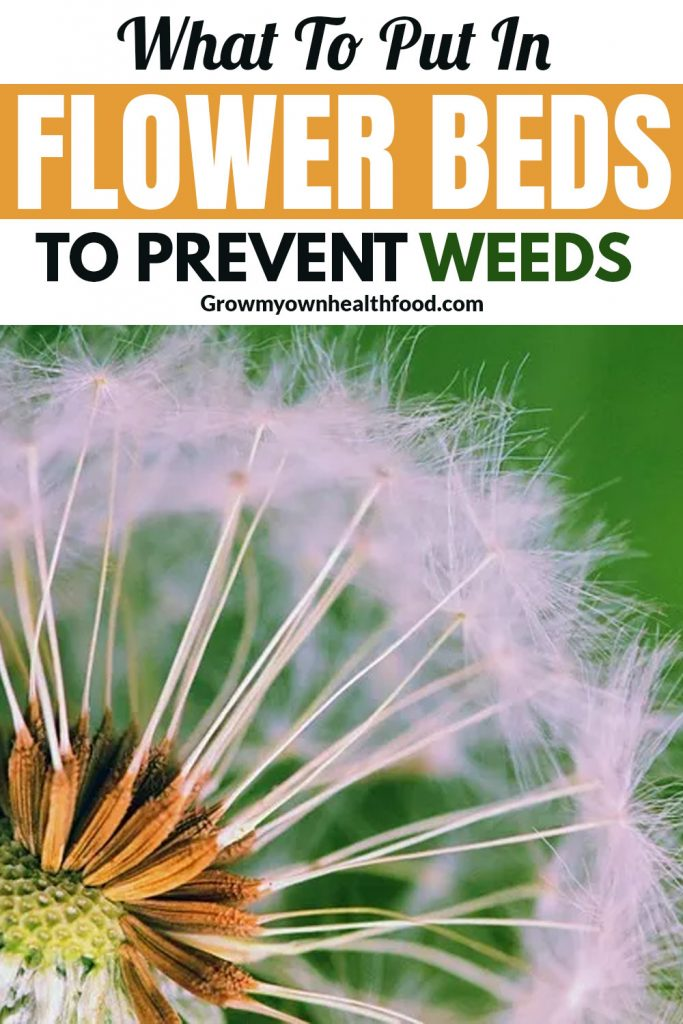 What To Put In Flower Beds To Prevent Weeds